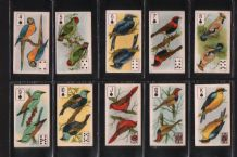 Tobacco cigarette cards Four Aces  Birds 1924 playing card insert set
